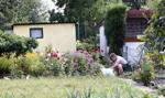 Osoby mieszkające na działkach - część z powodu biedy, część z wyboru