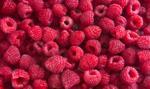 Ceny owoców pod lupą UOKiK