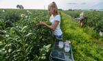 Polska największym producentem borówki w Europie i wzorem współpracy plantatorów