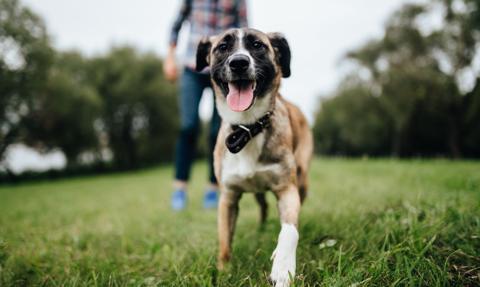 Chcesz mieć psa, musisz zrobić kurs. Kontrowersyjny rządowy projekt w Hiszpanii