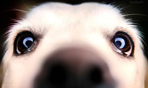 """Będzie rzecznik praw zwierząt? PiS nie mówi """"nie"""""""