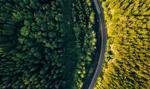 Ministerstwo Środowiska może stracić nadzór nad Lasami Państwowymi