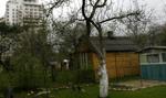 Od 17 czerwca nowe zasady wycinki drzew. Będą większe kary