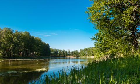 """60 km zanieczyszczonej Baryczy. """"Rezerwat przyrody i kompleks stawów bezpieczne"""""""