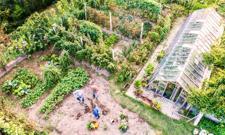 Czego nie wolno na ogródkach działkowych? Prawnik podpowiada