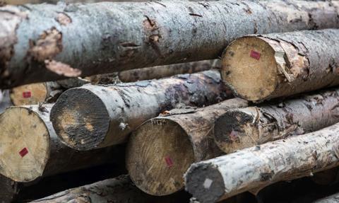 Ceny sosny W_Standard na portalu e-drewno wzrosły w grudniu do 228 zł/m sześc.