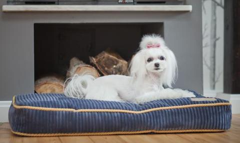 Kobiecy pomysł na biznes: akcesoria dla psów