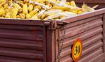 Wartość eksportu żywności w 2019 r. wyższa o prawie 6 proc.