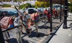 W Hiszpanii zaostrzono przepisy dotyczące podróżowania oślimi taksówkami