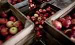 Jabłka dwa razy droższe niż przed rokiem