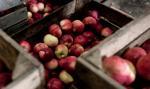 """""""Wyższe ceny owoców przełożą się na wzrost cen przetworów"""""""