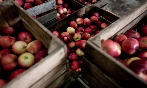 Na stołecznych targowiskach uratowano przed zmarnowaniem niemal 3 tony warzyw i owoców