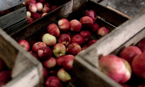 Polskie jabłka powróciły masowo na rynek rosyjski