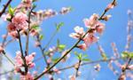 Japonia: deflacja wciąż rośnie