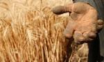Włochy: rząd zaostrza walkę z niewolniczą pracą w rolnictwie